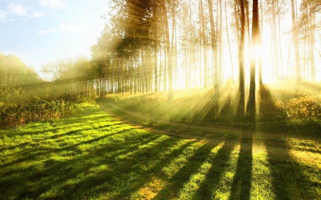 vitamin from the sun - vitamin d benefits