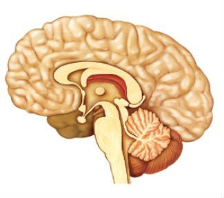 detoxify the pineal gland calcification