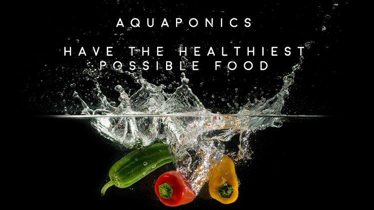 Men's Health Blog: what is aquaponics