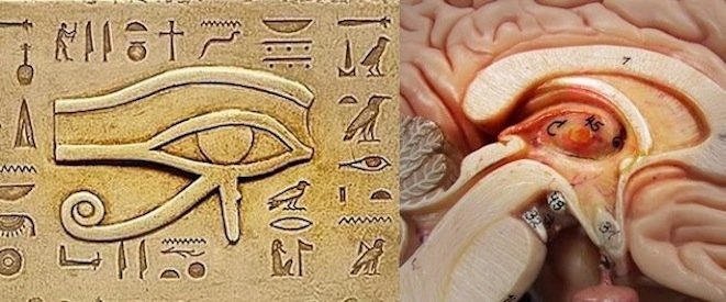 egyptian third eye of horus and the pineal gland