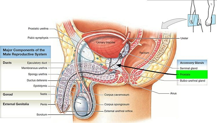 what is DHT and its effects on the prostate