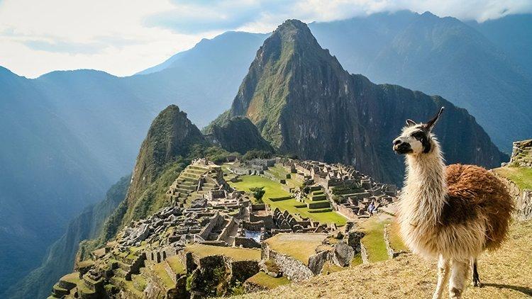 the Maca team maca is harvested in Peru