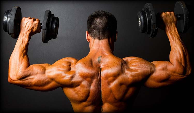 anabolic steroid and muscle mass