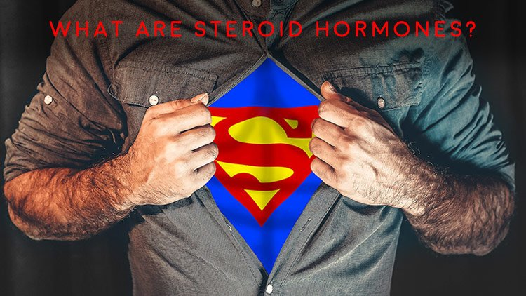 Men's Health Blog: what are steroid hormones