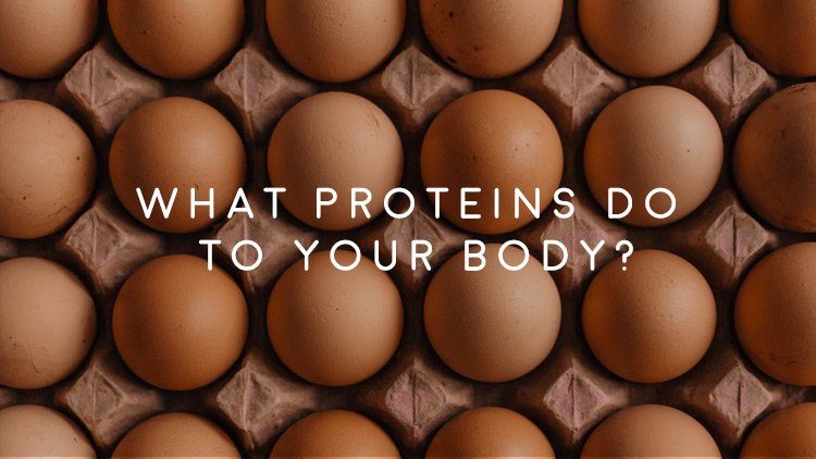 Men's Health Blog: What Protein Does For The Body?